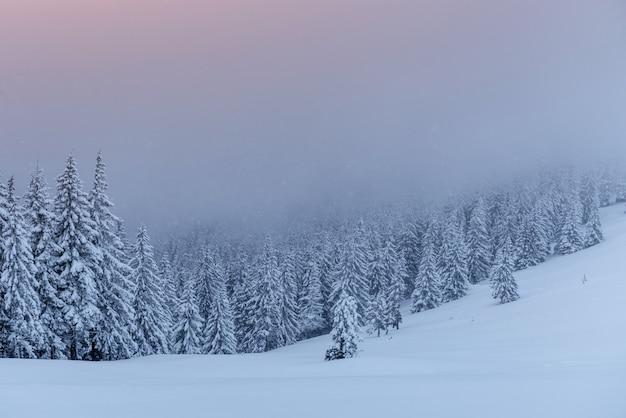 Paysage d'hiver mystérieux, montagnes majestueuses avec arbre couvert de neige.