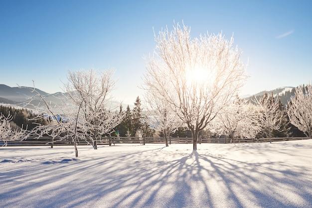 Paysage d'hiver mystérieux montagnes majestueuses en hiver. arbre couvert de neige d'hiver magique. carpates. ukraine