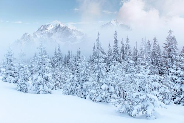 Paysage d'hiver mystérieux montagnes majestueuses en hiver.