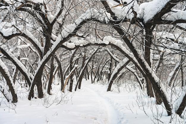 Paysage d'hiver avec de la neige et des arbres