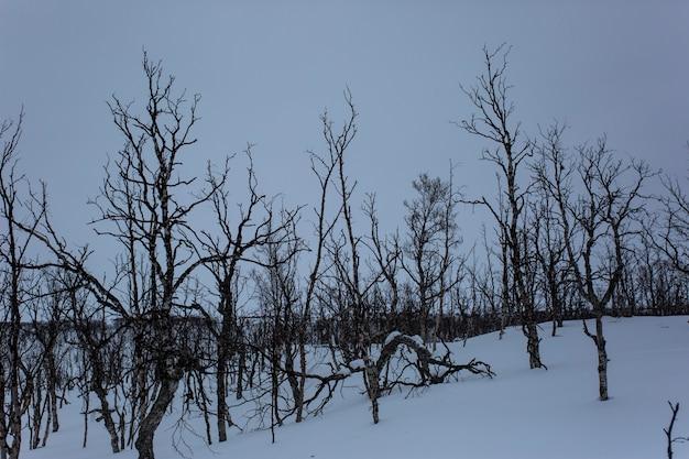 Paysage d'hiver à nuorgam, laponie, finlande