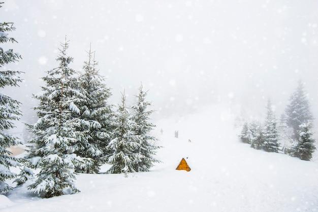 Paysage d'hiver rigoureux de beaux sapins enneigés se tiennent contre une zone montagneuse brumeuse par une froide journée d'hiver