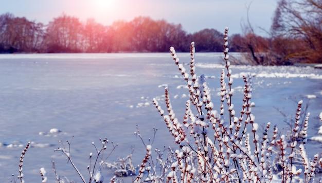 Paysage d'hiver avec rivière et plantes enneigées au coucher du soleil