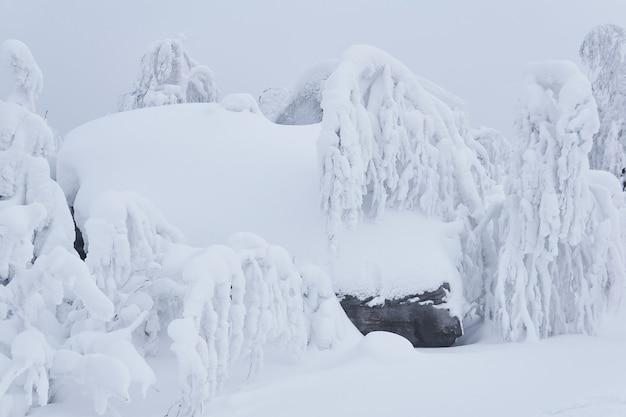Paysage d'hiver - la roche et les arbres bizarres sur le plateau de montagne sont couverts de neige profonde
