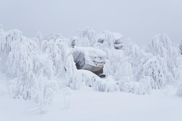 Paysage d'hiver - des rochers et des arbres bizarres sur le plateau montagneux sont recouverts de neige profonde