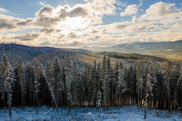 Paysage D'hiver Avec Des Sapins De Forêt Couverte De Neige Dans Les Montagnes Froides. Photo Premium