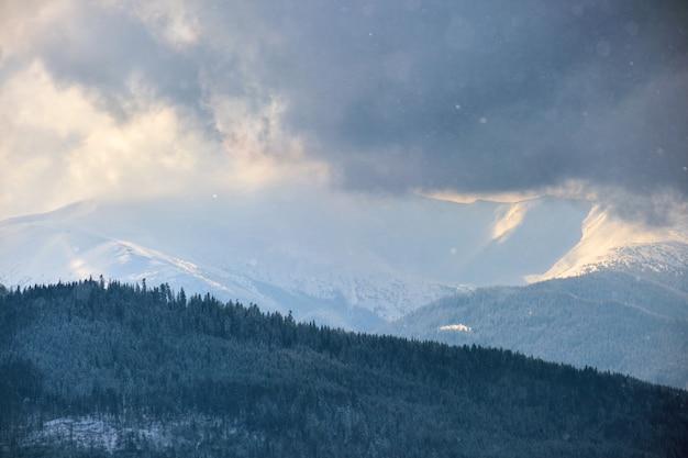 Paysage d'hiver avec des sapins de forêt couverte de neige dans les montagnes froides.