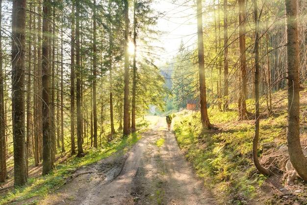 Paysage avec un homme sur la route dans la forêt verte et les rayons du soleil