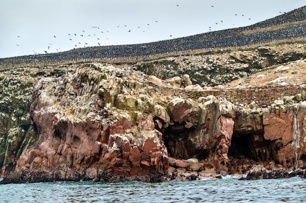 Paysage des îles ballestas au pérou