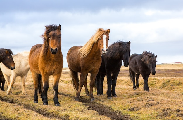 Paysage Incroyable En Islande Belle Nature Photo Premium