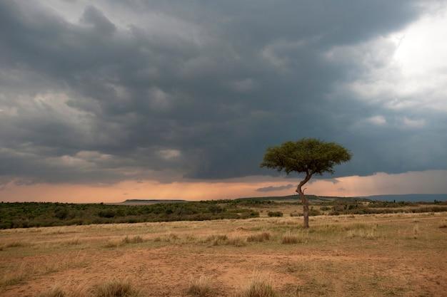 Paysage kenyan