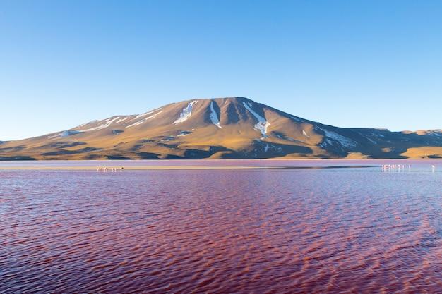 Paysage de la laguna colorada