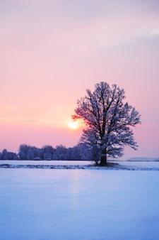 Paysage de lever de soleil hiver abstraite avec un arbre solitaire et un ciel coloré.