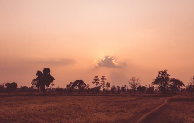Paysage magnifique coucher de soleil avec la silhouette des arbres dans la forêt.