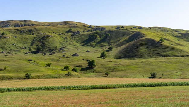 Paysage d'une magnifique plaine en été