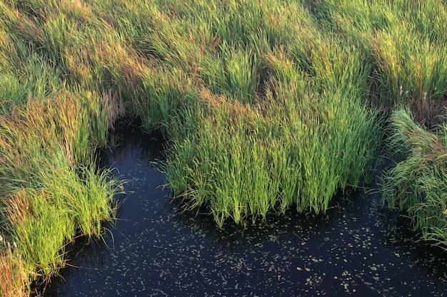 Paysage de marais avec de l'herbe