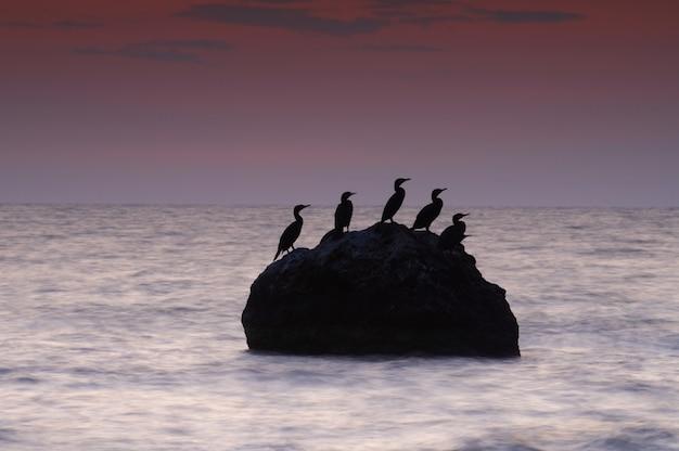 Paysage marin d'été coloré. île rocheuse avec oiseaux au coucher du soleil