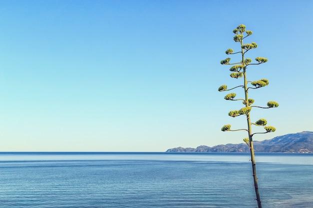 Paysage marin méditerranéen au petit matin.