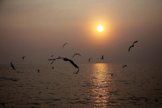 Paysage marin d'oiseau volant au coucher du soleil