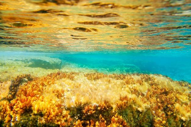 Paysage marin sous-marin d'anémones d'ibiza formentera