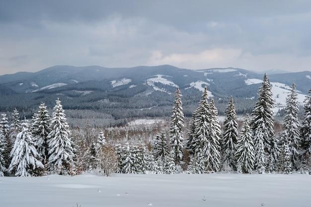 Paysage maussade avec des pins recouverts de neige fraîche tombée dans la forêt de montagne d'hiver en soirée froide et sombre.