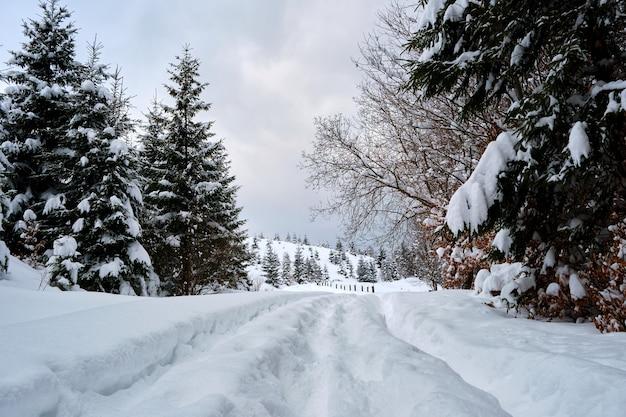 Paysage maussade avec des sentiers pédestres et des pins recouverts de neige fraîche tombée dans la forêt de montagne d'hiver par une froide soirée sombre.