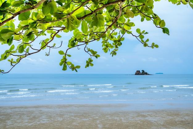 Le paysage de la mer aux feuilles vertes est un beau premier plan.