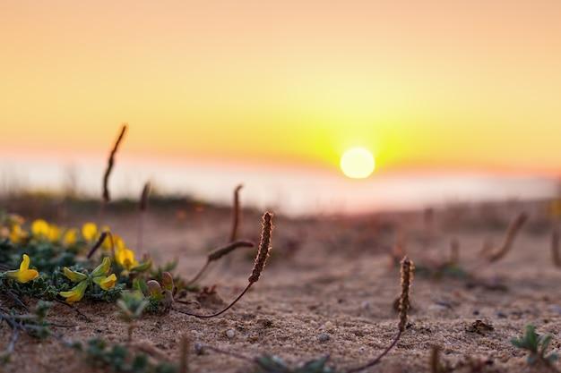 Paysage minimaliste du coucher de soleil macro.