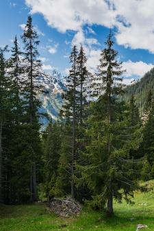 Paysage de montagne des alpes d'été avec forêt de sapins sur la pente et sommets rocheux couverts de neige au loin, en autriche.