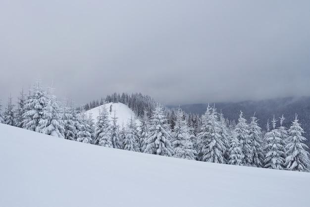 Paysage de montagne calme du matin avec de beaux sapins givrants et une piste de ski à travers des congères sur un versant