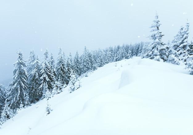 Paysage de montagne calme d'hiver avec des chutes de neige et de beaux sapins sur la pente (mont kukol, montagnes des carpates, ukraine)