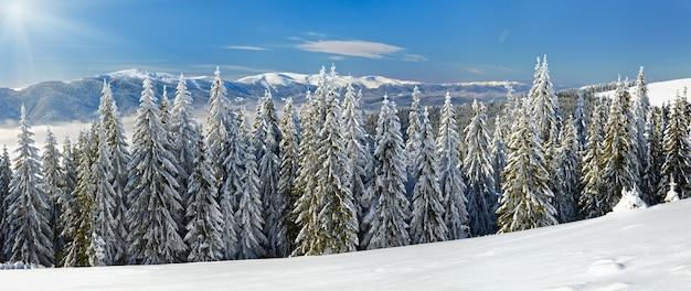 Paysage de montagne calme d'hiver avec des épinettes couvertes de givre et de neige et du soleil.