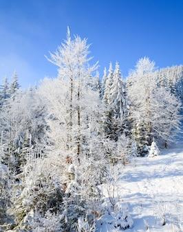 Paysage de montagne calme d'hiver avec des épinettes couvertes de givre et de neige et quelques chutes de neige
