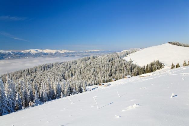 Paysage de montagne calme d'hiver avec quelques tiges enneigées à l'avant et groupe de hangars derrière (vue de la station de ski de bukovel (ukraine) à la crête de svydovets)