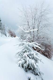 Paysage de montagne calme et terne d'hiver avec des sapins enneigés sur la colline