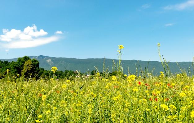 Paysage de montagne avec des fleurs
