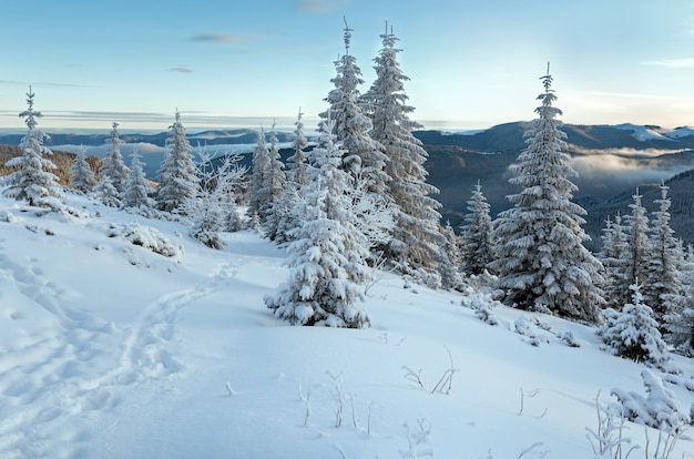 Paysage de montagne d'hiver du matin avec des sapins sur la pente et les traces.