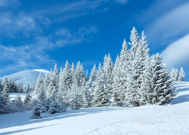 Paysage de montagne d'hiver du matin avec des sapins sur la pente.