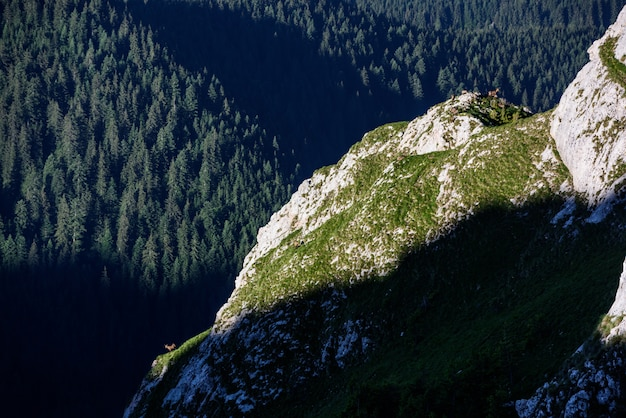 Paysage de montagne en matinée avec chamois
