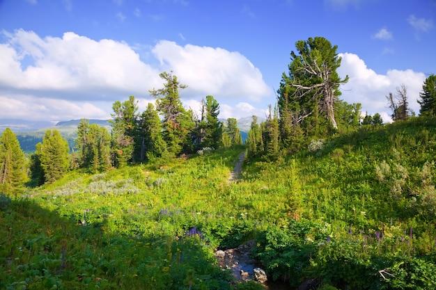 Paysage de montagne avec ruisseau.