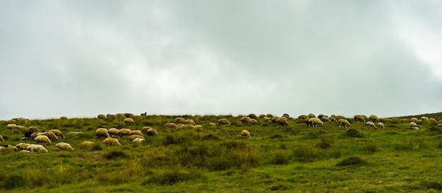 Paysage de montagne rural