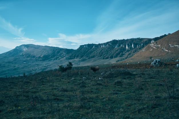 Paysage montagnes ciel herbe verte nuages aventure voyage tourisme