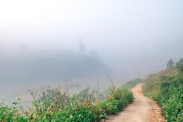 Paysage de montagnes forestières dans la brume