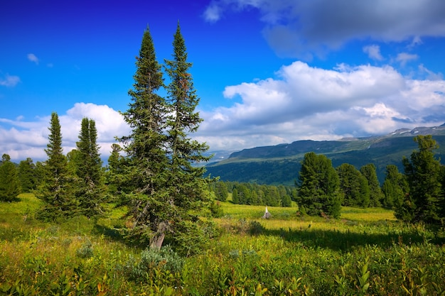Paysage avec des montagnes forestières