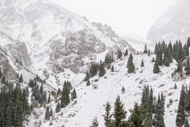 Paysage de montagnes rocheuses d'hiver avec brouillard