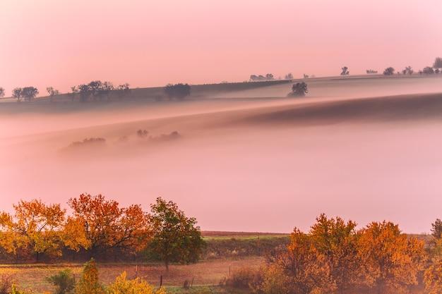 Paysage morave avec des arbres et des champs d'automne colorés dans la brume matinale. moravie du sud, république tchèque.