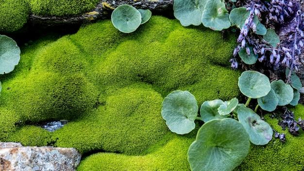 Paysage de mousse verte sur un mur extérieur