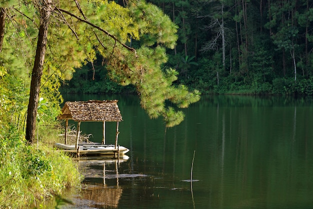 Paysage naturel avec une forêt autour d'un lac