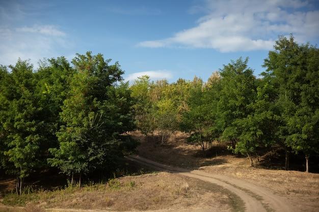 Paysage naturel de la route du village menant à la forêt. journée ensoleillée avec un ciel bleu.
