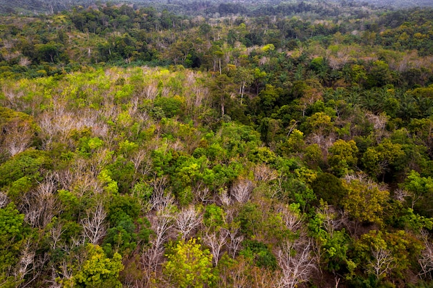 Paysage naturel vert dans la forêt de sumatra indonésienne verte et fraîche